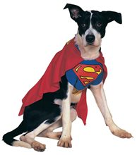 Picture of Superman Dog Costume