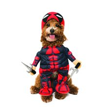 Picture of Walking Deadpool Pet Costume (Coming Soon)